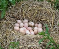 如风营销:先养鸡还是先卖蛋?