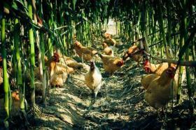 如风营销:去农村创业需要那些条件,如何选择项目?