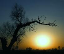"""如风营销:有赚钱的心,你需要提前""""种树""""提前播种"""